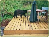 a bear on a deck