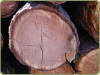 4 inch logs with dense growth rings